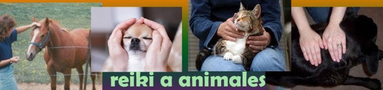 reiki a animales